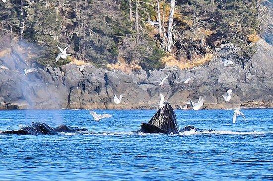Amazing Whale Watching and Marine...