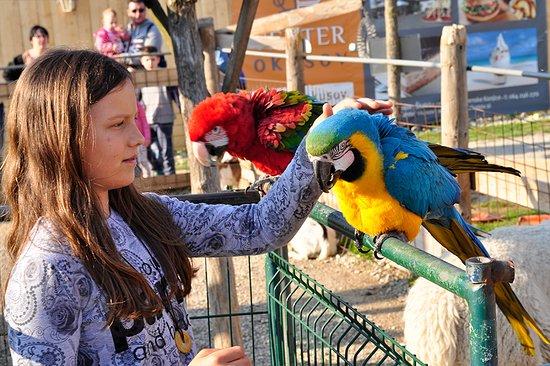 Slovenske Konjice, Slovenia: You can pet exotic talking parots.