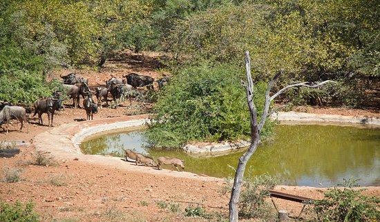Marken, Südafrika: Watering Hole