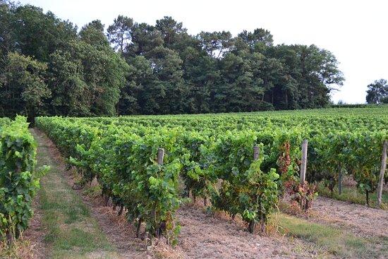 Lembras, Frankreich: Viñedos de Pécharmant