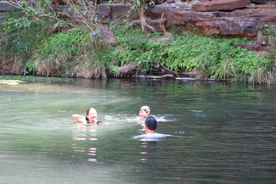 Perth, Australia: A dip in the river amongst the tall trees
