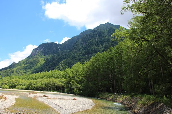 Larch Forests In Kamikochi area