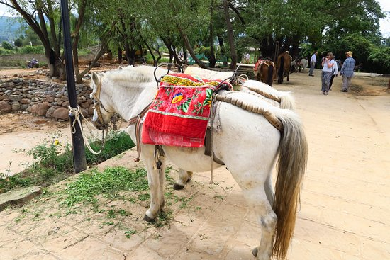 Yunnan Shaxi Ancient Town: Lots of horses with decorated saddles