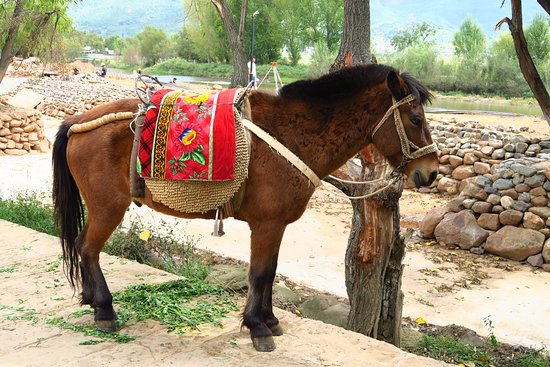 Yunnan Shaxi Ancient Town: One more horse with a fancy saddle!
