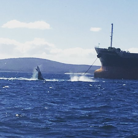 Albany, Australia: A bit of action on a whale tour