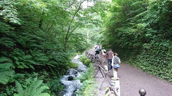 Shiraito Falls: DSC_3185_large.jpg