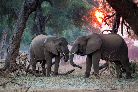 Mana Pools National Park, Zimbabwe: Game Viewing at Chikwenya