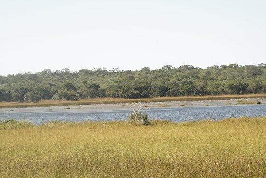 Kasanka  National Park照片
