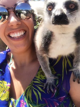 North Sound, Virgin Gorda: Lemur Selfies