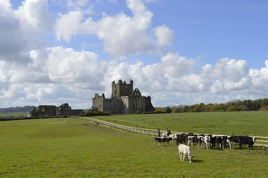 Campile, Ирландия: Dunbrody Abbey - view from the road