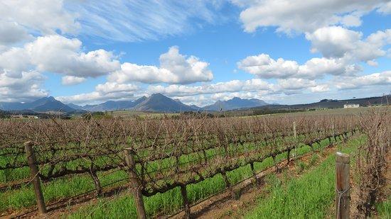 Tsiba Tsiba Wine Tours: South Africa Winelands