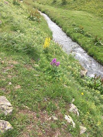 Juta, Georgien: Along the hiking trail