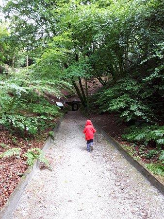 Сент-Остелл, UK: Beautiful trails to follow
