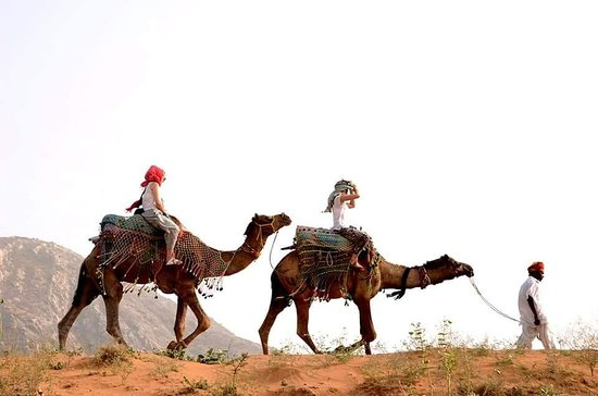 ‪Dharma Camel Safari Pushkar‬
