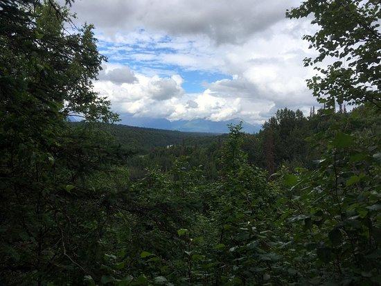 Trapper Creek, AK: Tree house view
