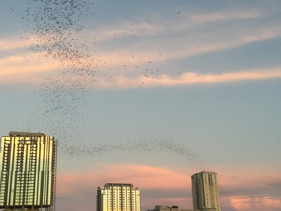 Bat-watching from Capital Cruises: Austin, Texas
