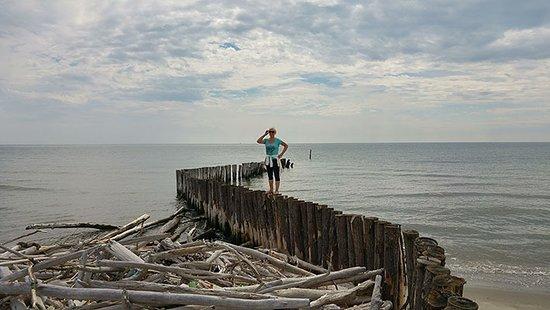 Motorship Dali: Spiaggia isola dell'amore, nei pressi di Po di Goro ovvero del faro di Gorino.