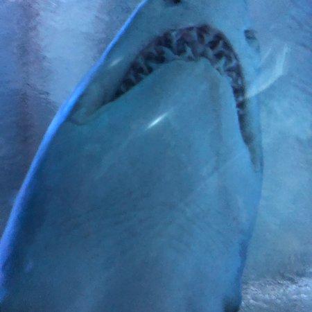 Aquaria KLCC: photo1.jpg
