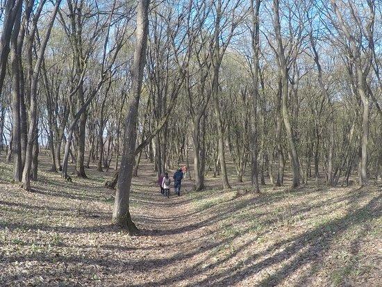 Hoia Baciu Forest: a walk