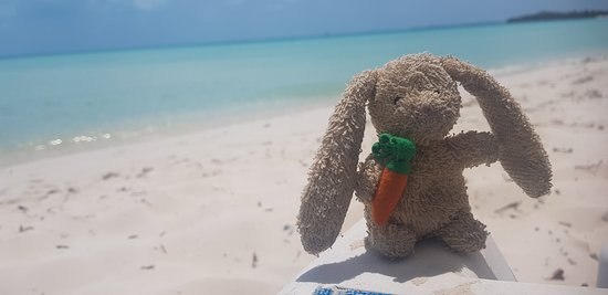 Taylor Bay Beach Bubble My Travel Rabbit At