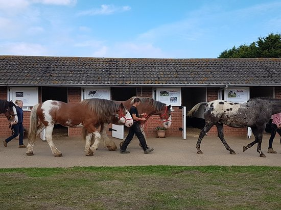 Hillside Shire Horse Sanctuary