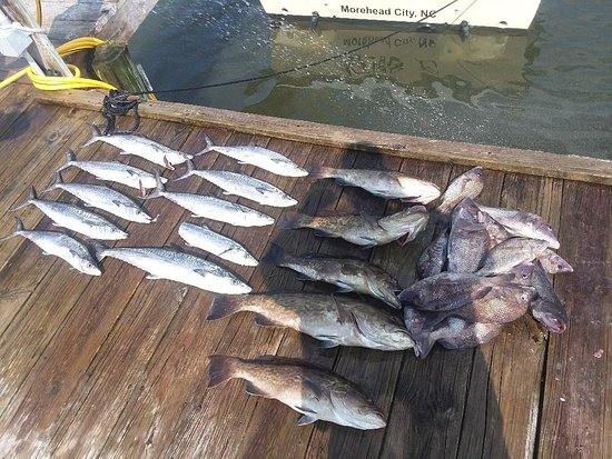 Morehead City, NC: We fought a bunch of fish.