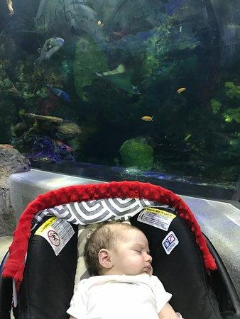 Virginia Aquarium & Marine Science Center: Money well spent