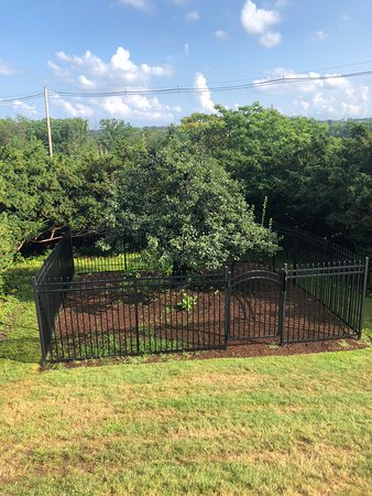 Endicott Pear Tree: Showing new fence around the tree