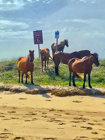 Shackleford Banks Wild Horse & Shelling Expedition