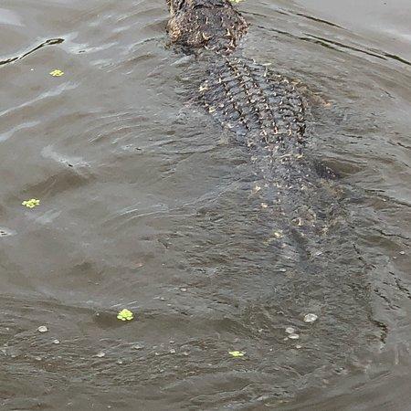 Westwego, Luizjana: photo7.jpg