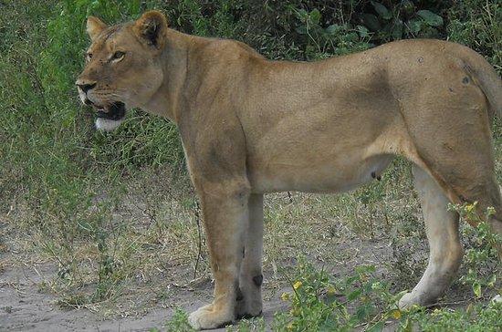 5 Tage Mobile Safaris Hwange &amp...