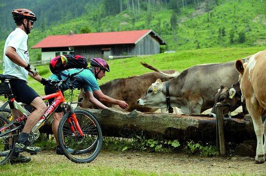 Cycling Tour: Romantic Road