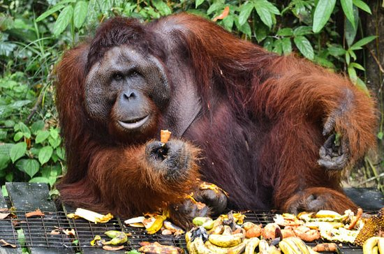 Sarawak Semenggoh Wildlife Centre Tour