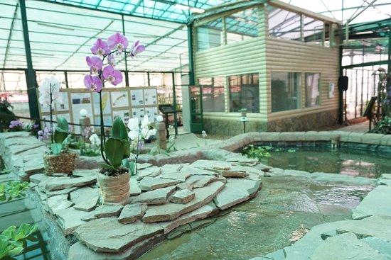 Orchids Museum