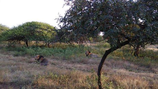 Devalia Safari Park Photo