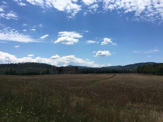 Chiusdino, Italien: I campi di grano