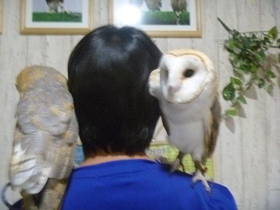 Owl Cafe Ricky
