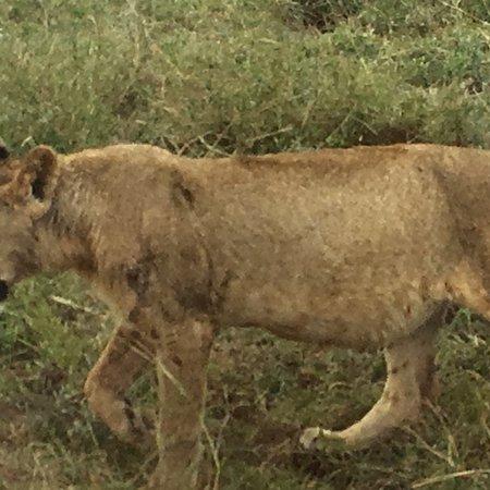 Nairobi Animal Orphanage: photo0.jpg