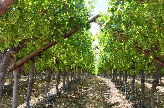 TourScape: Vineyards of Constantia