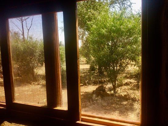 Oloitokitok, Kenya: View from Enkaji Garden room.