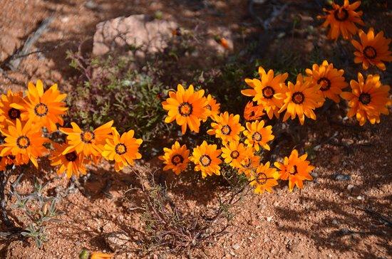 Springbok, South Africa: Flower in the park