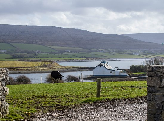 Dairy Farm, Flaggy Shore, Wild Atlantic Way, Ireland