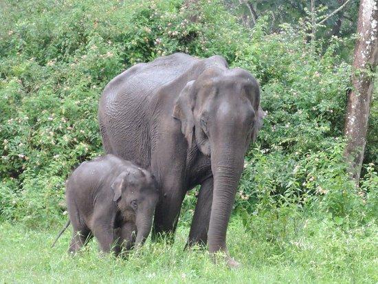 Mudumalai, Ινδία: DSCN0587_large.jpg
