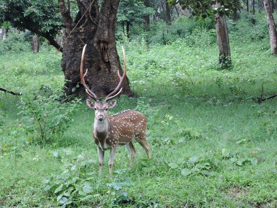 Mudumalai, Индия: DSCN0588_large.jpg