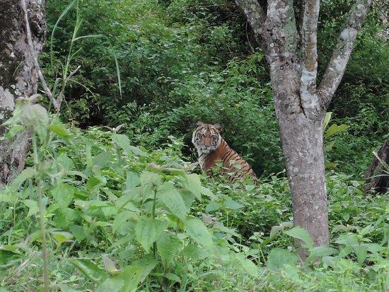 Mudumalai, Индия: DSCN0607_large.jpg