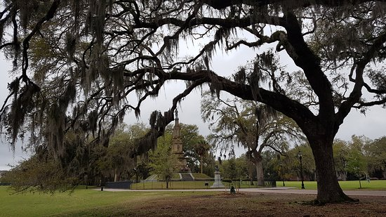 Savannah Historic District: Trees with spanish moss