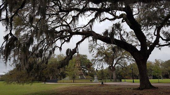 Savannah Historic District: Trees with spanish moss