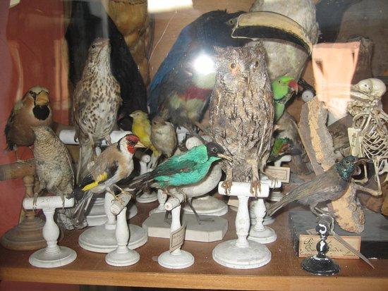 Interieur D Un Cabinet De Curiosite Revisite Par Un Artiste