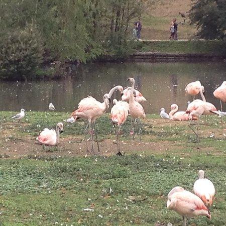 Parc de Cleres: photo3.jpg
