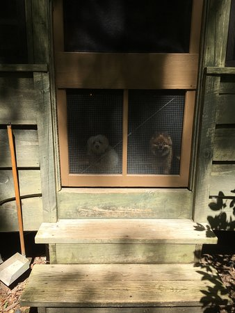 Ash Grove Mountain Cabins & Camping: Teddy & Parpar waiting at the door